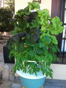 Our Tower Garden